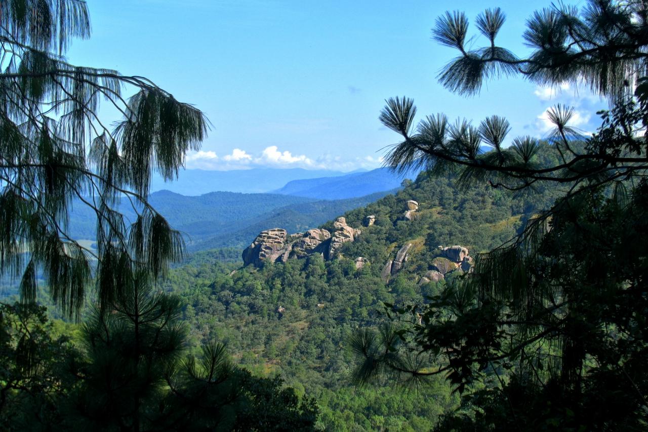 Bosque en Chiquilistlán