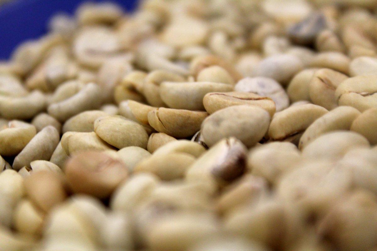 Granos de café de Talpa de Allende