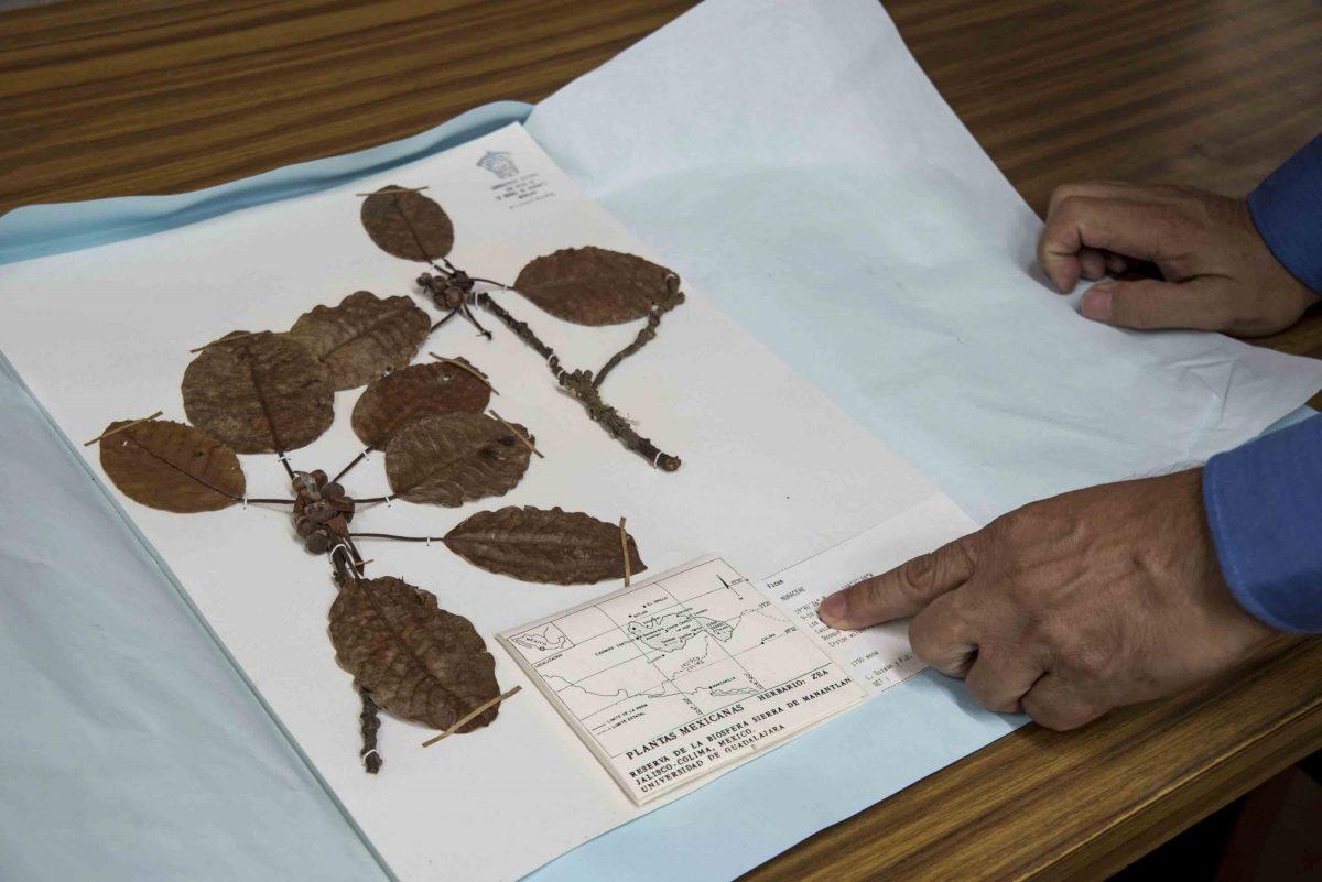 Nuevas especies de vegetales en el sur de Jalisco