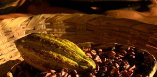 Cacao Puerto Vallarta
