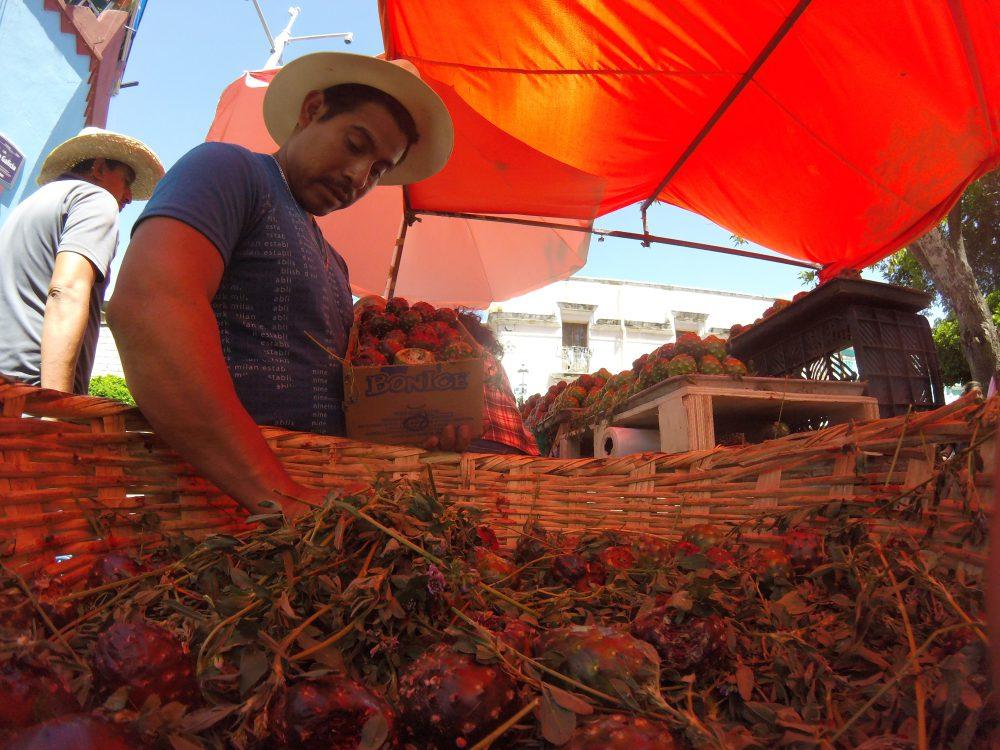 Pitayas en las Nueve Esquinas, Foto: Antonio
