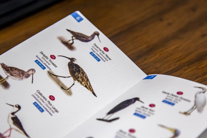 Guía de aves en Laguna de Zapotlán