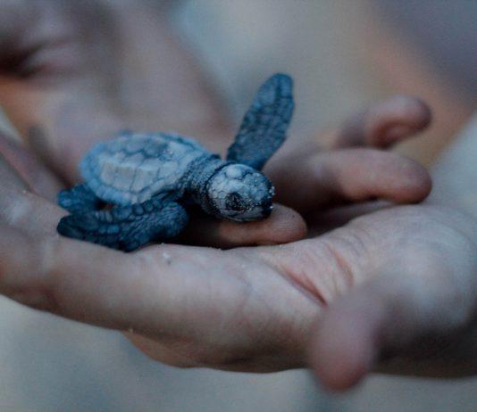 Tortugas Campamento La Gloria