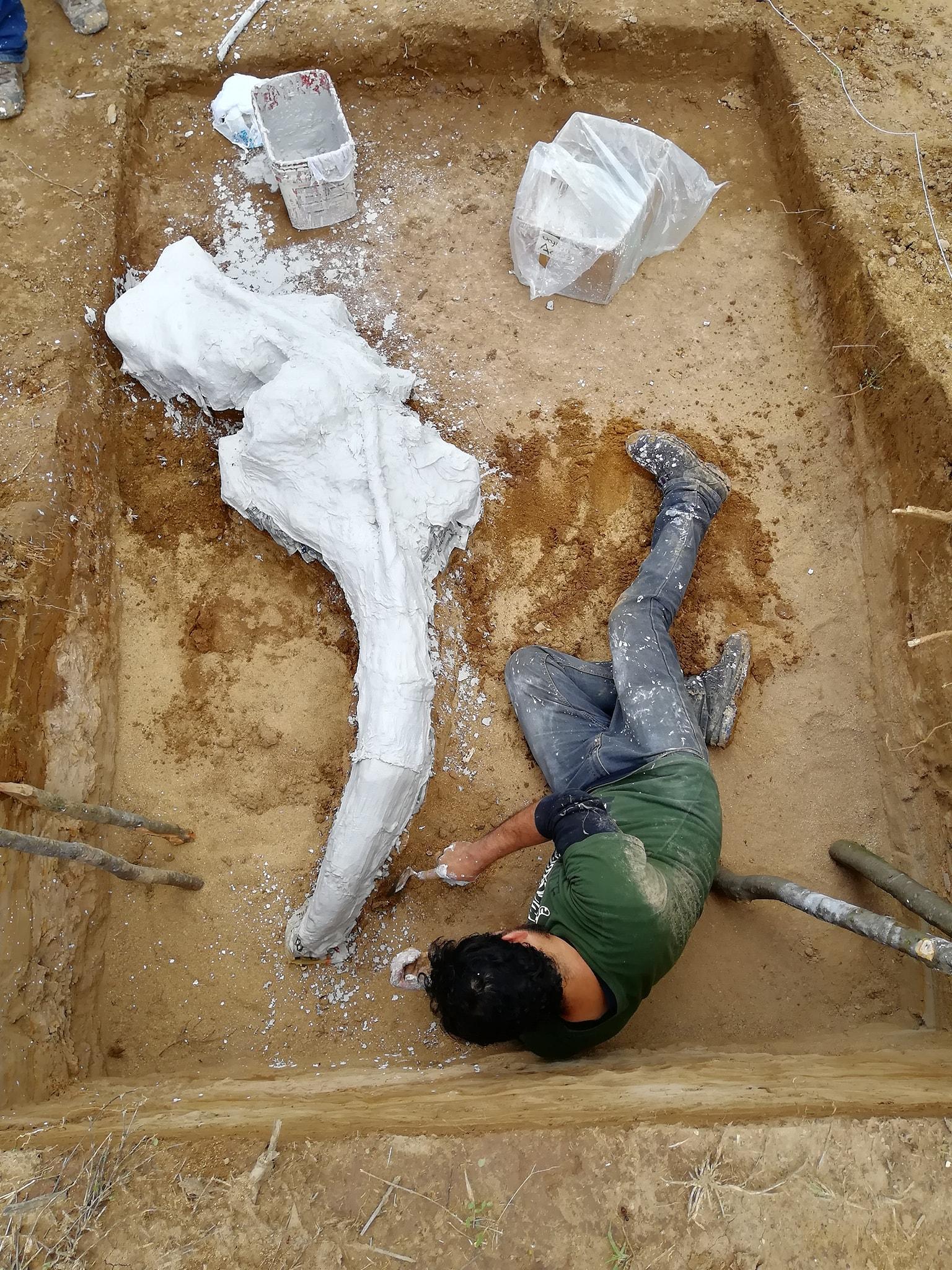 Descubrimiento de mamut en Zapotiltic