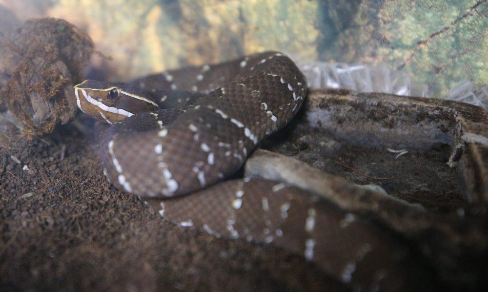 Serpiente, Exposición Biológica Itinerante del CUCSur