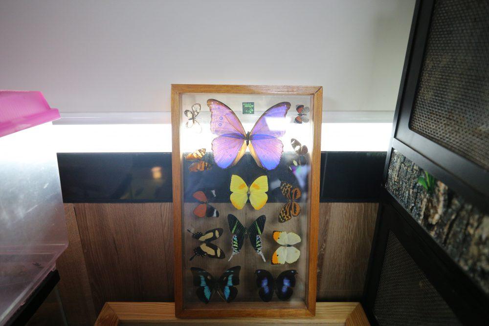 Mariposas, Exposición Biológica Itinerante del CUCSur