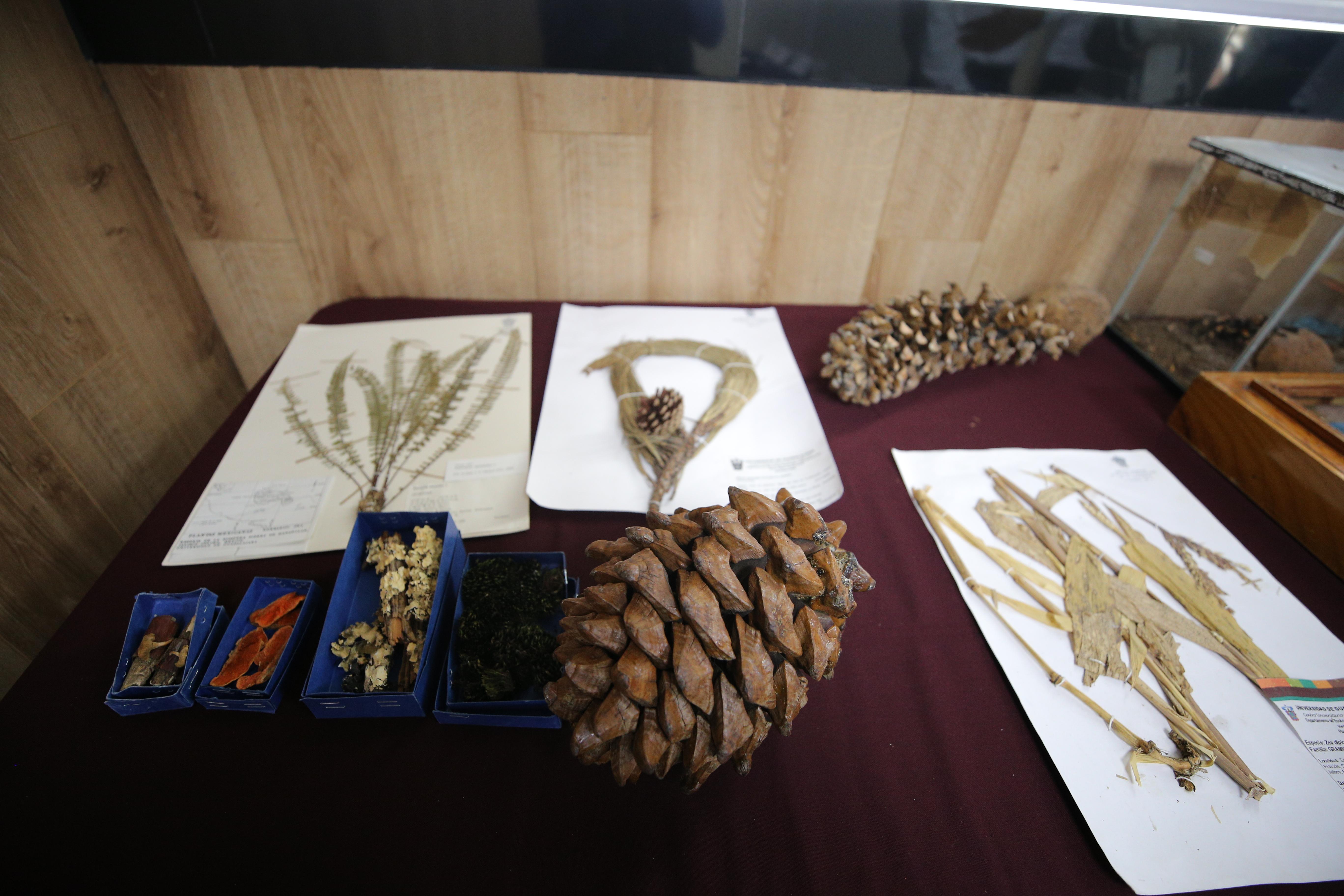 Colección botánica, Exposición Biológica Itinerante del CUCSur