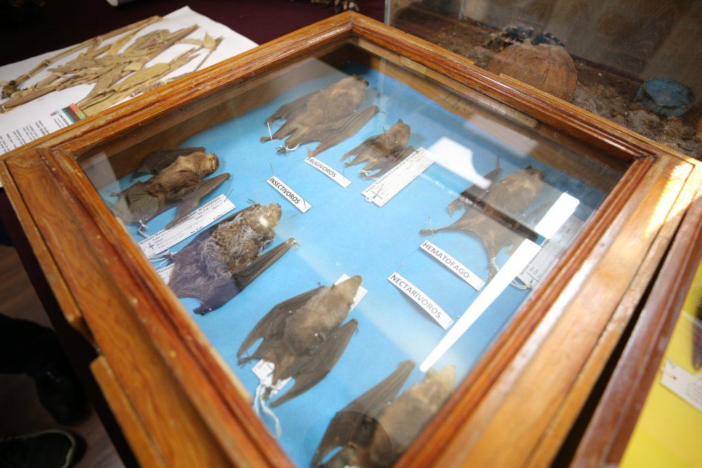 Murciélagos de Jalisco, Exposición Biológica Itinerante del CUCSur