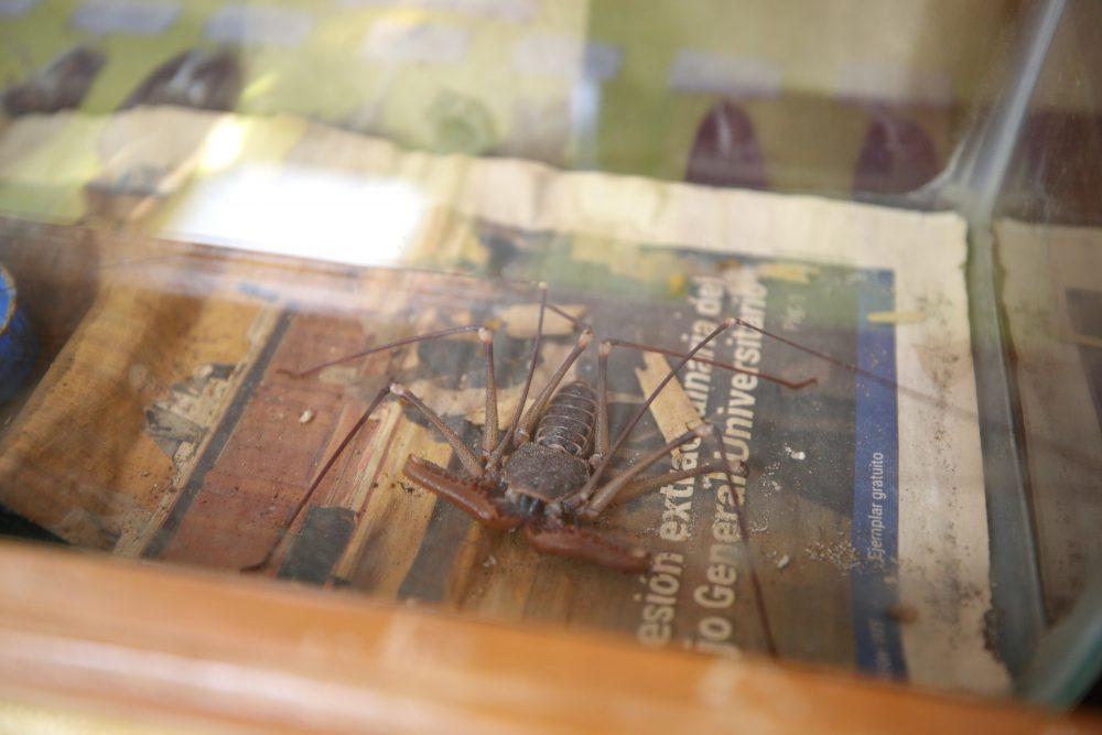 Vinagrillo, Exposición Biológica Itinerante