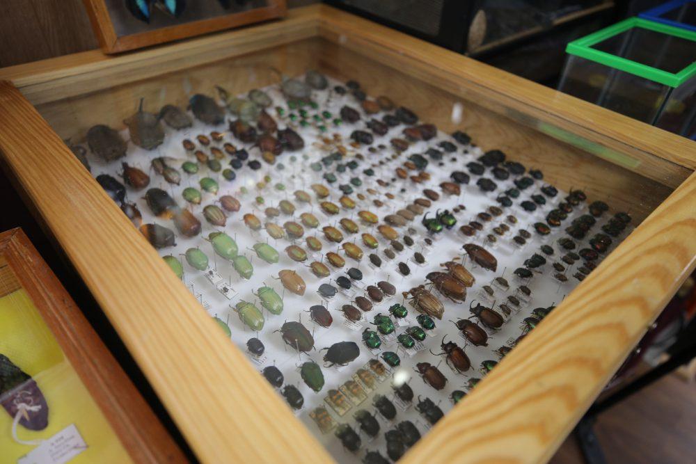 Escarabajos, Exposición Biológica Itinerante del CUCSur