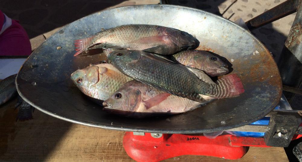 Pescado a la venta en Tuxcueca