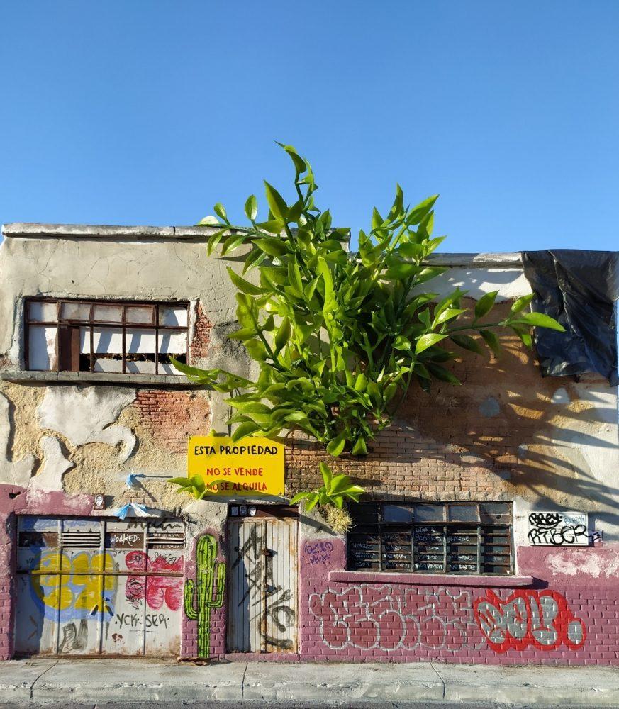 """""""Drash"""" recrea entornos urbanos tapatíos"""