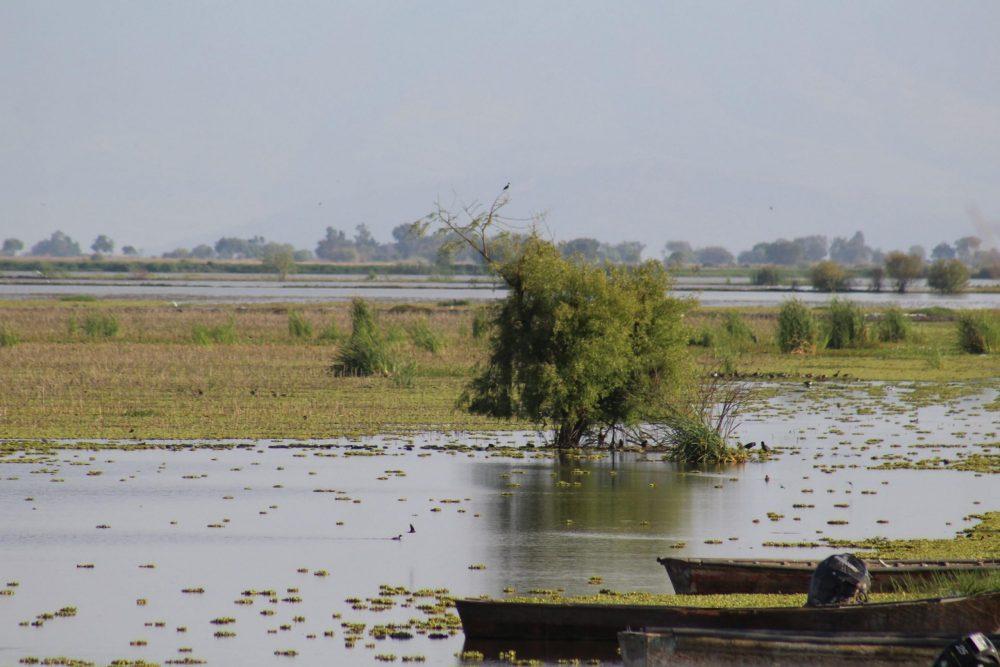 Jamay tierras en Chapala