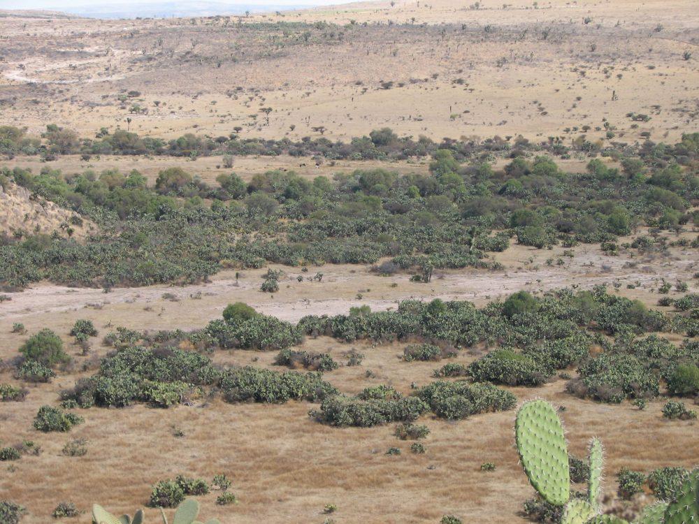 Paisaje biocultural en Ojuelos